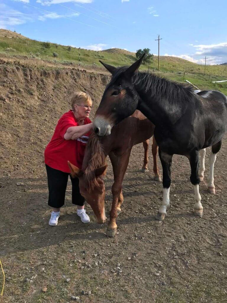 Gail, playing with the mules